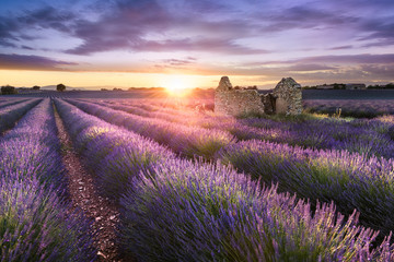 Fotobehang Aubergine LAVENDER IN SOUTH OF FRANCE