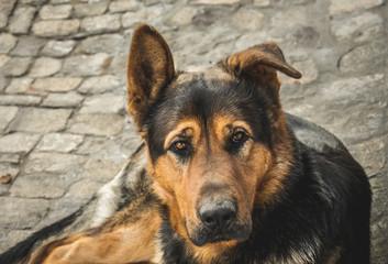 Приют для собак. Грустный пёс