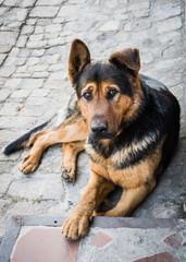 Приют для собак. Доброта и милосердие