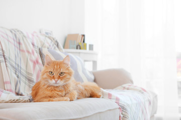 Fluffy red cat lying on sofa Wall mural