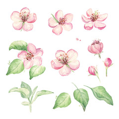 Vintage flowers set. Wedding floral elements set. Hand drawn spring flowers. Collection of pink apple flowers. Watercolor