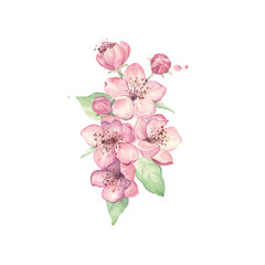 Apple pink flowers. Cherry blossom branch. Watercolor painting