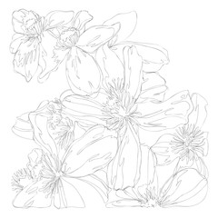 beautiful flowers line art continuous line drawing