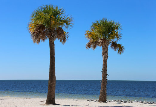Perfect Palm Trees