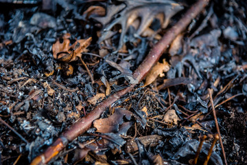 low angle view of burnt leaves, sticks, and ash on ground after controlled burn to restore natural prairie in forest preserves