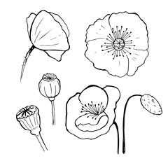 Black poppies isolated on a white background. Poppy doodle seed heads and flower illustration
