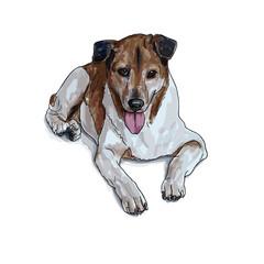Lying brown dog