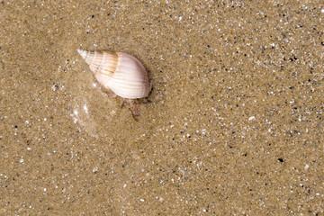 Hermit crab on wet sand