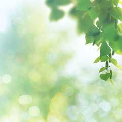 Beauty spring and summer backgrounds with birch tree and blurred seasonal texture
