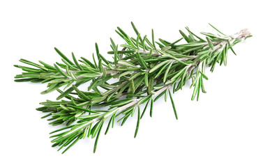 Twig of rosemary .