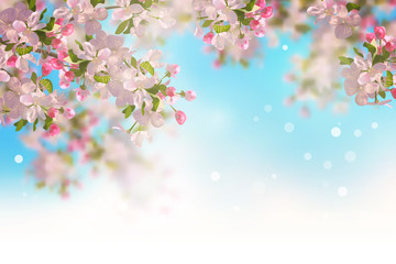 Spring Cherry Blossom