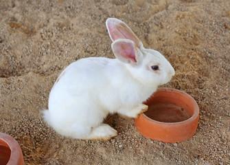 White bunny, rabbit in straw
