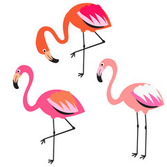 Flamingo flat style vector illustration. Pink coral exotic birds for stickers, stationery and fabric print.