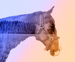 Koń o podwójnej ekspozycji - 140649256