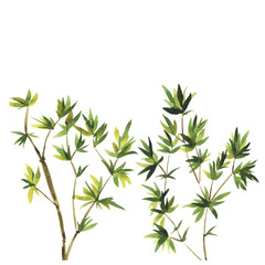 Abstract wild bamboo trees on white background. Hand drawn vector watercolor illustration.