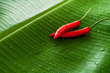 Two spicy chili peppers on fresh green banana leaf with water drops and space for your design and logo