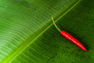 Red spicy chili pepper on fresh green banana leaf with water drops and space for your design and logo