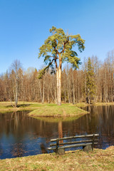 Solo spring lake tree for Inspiration and Wonderlust.