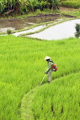 Side view of farmer working in rice paddy