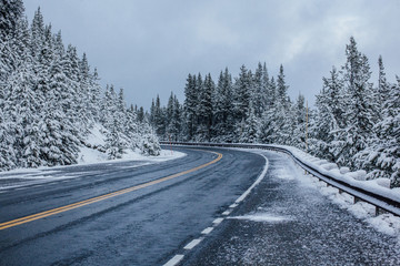 View of road amidst snow covered trees against sky