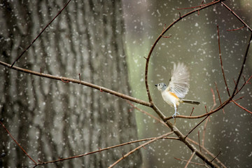 Close-up of bird flapping wings while perching on dry plant stem during snowing