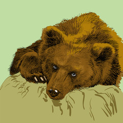 Brown bear. Bear head. Wild bear. Brown bear head.