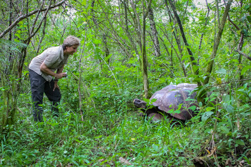 Tourist with Galapagos giant tortoise in natural forest habitat, Santa Cruz, Galapagos