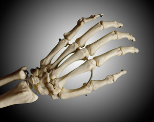 Study model of a skeleton of a human hand, grey background