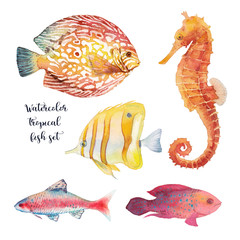 Watercolor tropical fish set. Hand drawn underwater animal illustration of coral reef fishes and sea horse isolated on white background. Artistic natural collection