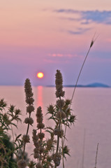 Sunset at sea with some mediterranean herbs in foreground at Sithonia, Greece