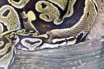 Photo of snake close up in zoo