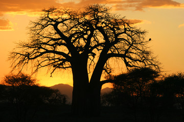 Sonnenuntergang in Tansania