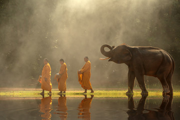 Thailand Buddhist monks walk collecting alms with elephant is traditional of religion buddhism on faith thai people.