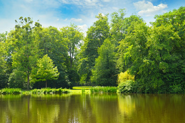 picturesque lake, summer forest on the banks and sky