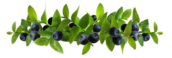 blueberry_composition