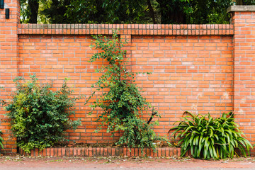 Brick wall with plants in a flower pot