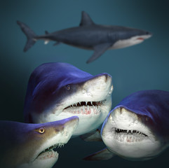Underwater picture of three sharks have a fun.