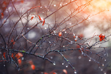 blurred background with branches and raindrops