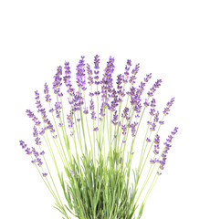 Lavender in the interior. blooming lavender. Provence Interior. Lavender on a white wall.