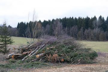 Waldarbeit - Forstwirtschaft - Aufbereitung von Schadholz