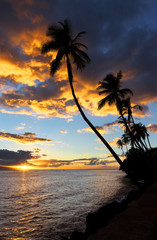 Palm Trees and Sunset, Kauai, Hawaii