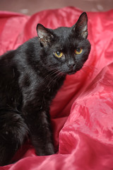 Cute black cat on red background