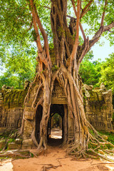 Ta Som temple. Strangler fig covering the third East Gate. Angkor, Cambodia