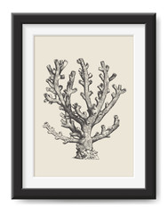 retro vector illustration: vintage drawing / engraving of a beautiful sea coral - perfect graphic design element for all sea / ocean / summer / beach themed print projects or wall art