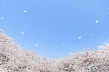 青空 桜吹雪 コラージュ