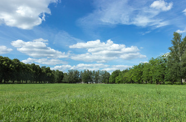 Landscape with blue sky and green grass