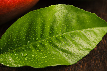 Green leaf covered with drops of dew on wooden background