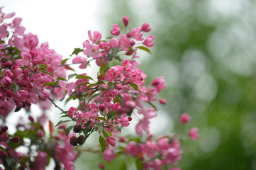 pink flower in blue background
