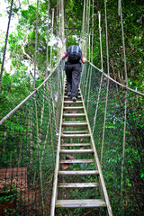 Canopy Walkway Borneo
