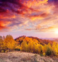 The sun's rays illuminate colored trees. Dramatic and picturesque morning scene.